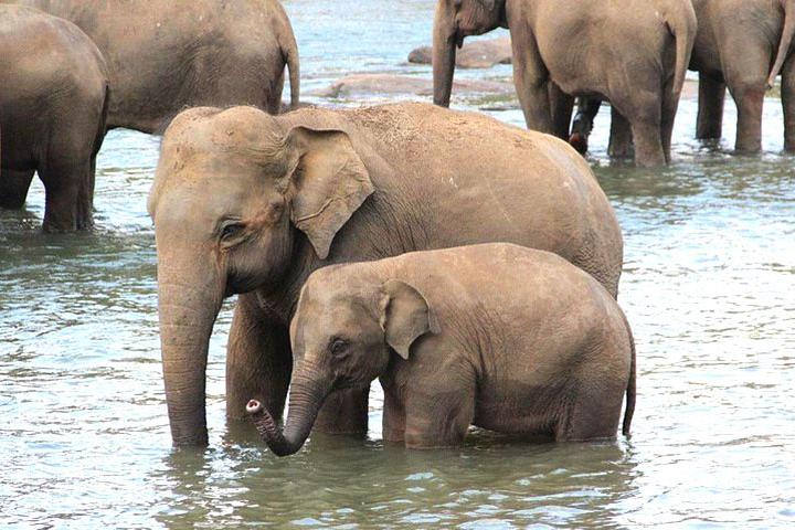 elephant-sanctuary6