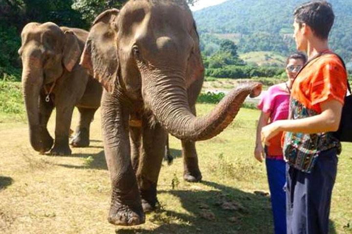elephant-sanctuary7