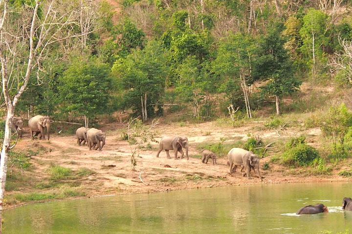 last-minute-elephant