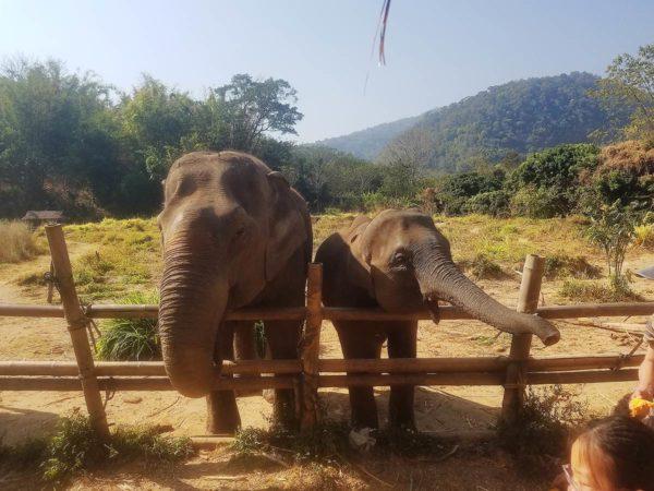 Elephant Explorers 01