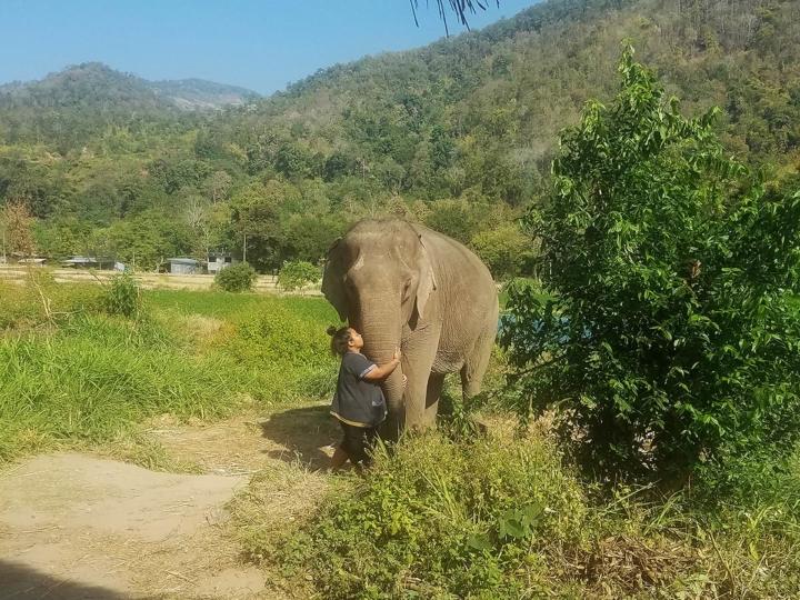 Elephant Explorers 02