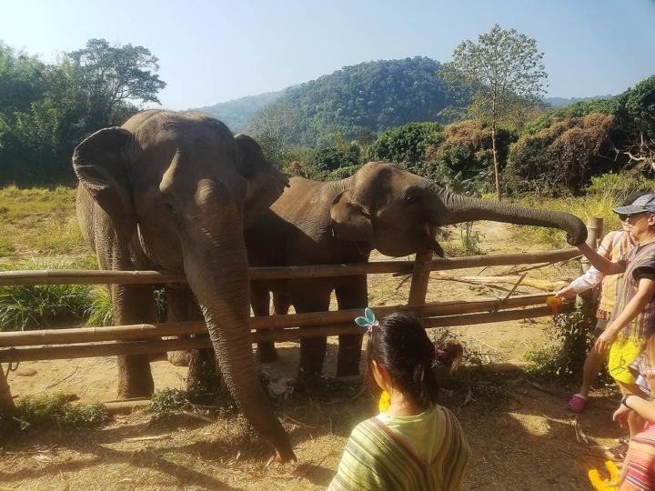 Elephant Explorers 03