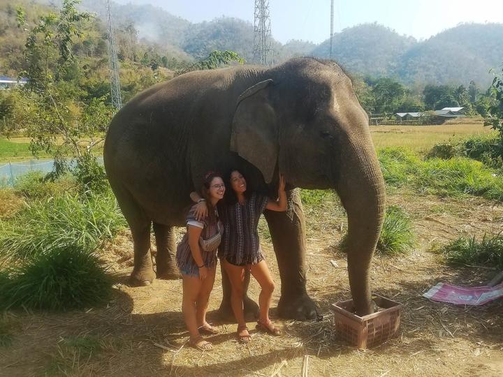 Elephant Explorers 04