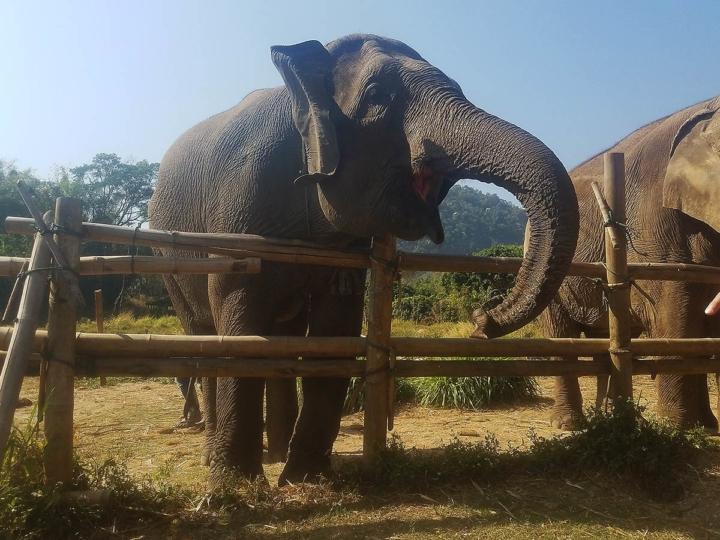 Elephant Explorers 05