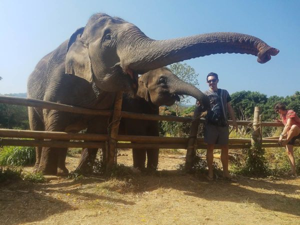 Elephant Explorers 06