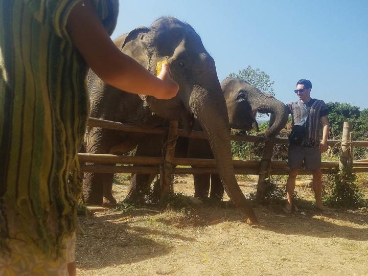 Elephant Explorers 07