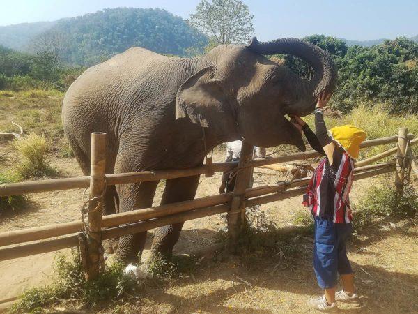 Elephant Explorers 08