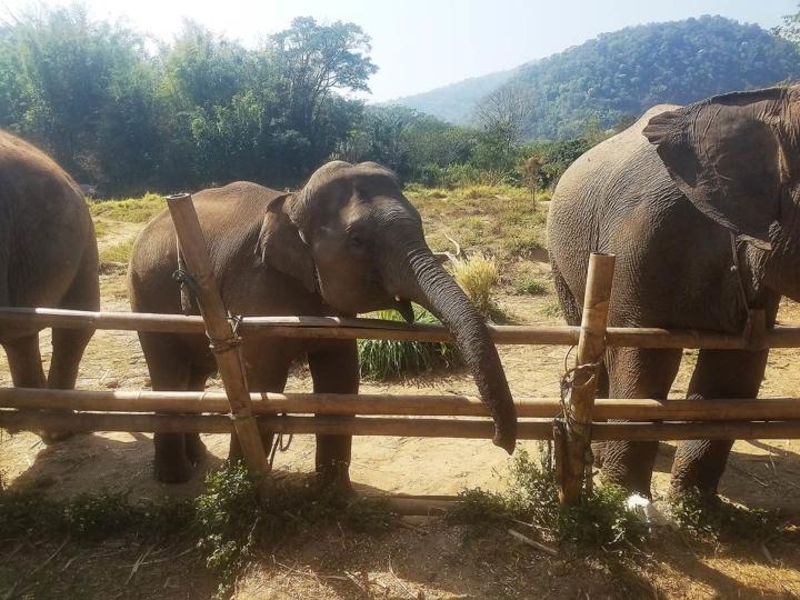 Elephant Explorers 0
