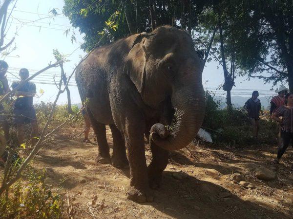 Elephant Explorers 10