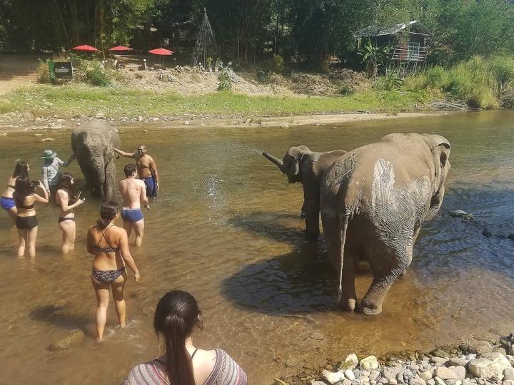 Elephant Explorers 11