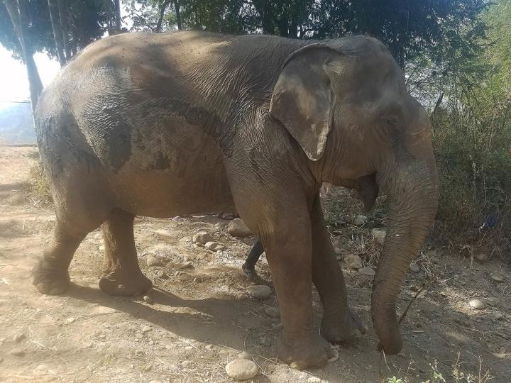 Elephant Explorers 12