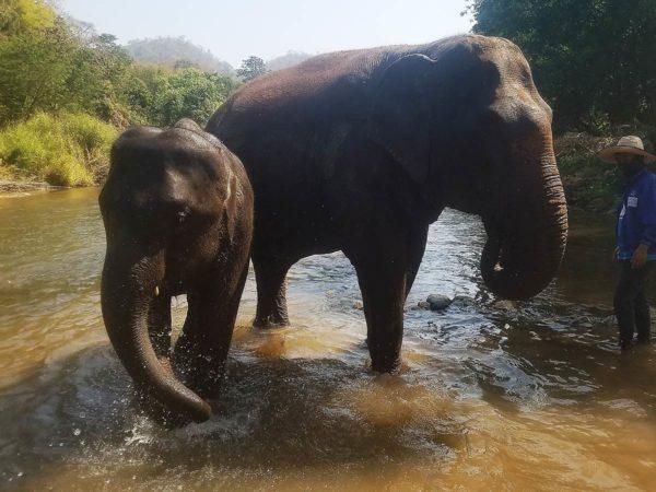 Elephant Explorers 14